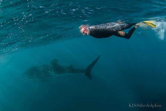 Geoff swimming with Whale Shark
